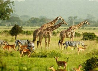 Race To Save Africa's Wildlife From Poachers