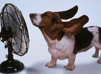 Weather Warning: Heatwave Hits South Africa