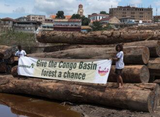 DRC Bans Dodgy Loggers, Greenpeace Wants More